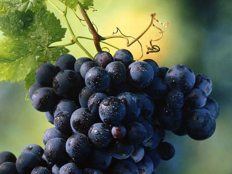 Nero d'Avola: Il Principe dei vini di Sicilia