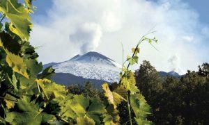 Le vigne dell'Etna
