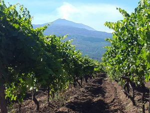 I vitigni dell'Etna