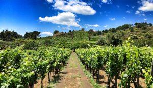 La splendida e assolata campagna della Sicilia sud orientale