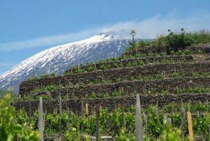Il Nerello Mascalese ed i suoi Vini Rossi Etna DOC. Nerello Mascalese: condizioni pedoclimatiche