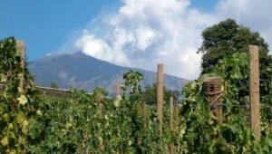Il Nerello Mascalese ed i suoi Vini Rossi Etna DOC. Paesaggi Mascalesi dell'Etna