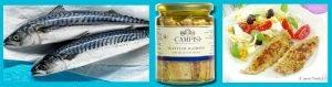 Conserve Campisi di Sgombro del Mediterraneo