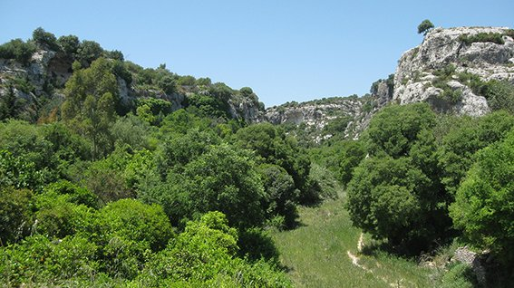 Il Favoloso Miele dei Monti Iblei Siciliani
