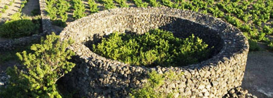 Zibibbo di Pantelleria, Patrimonio UNESCO dell'Umanità