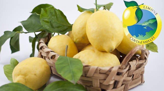 Limone dAmalfi IGP